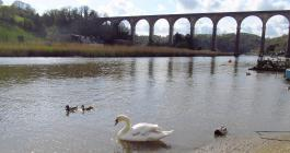 River Tamar,Calstock